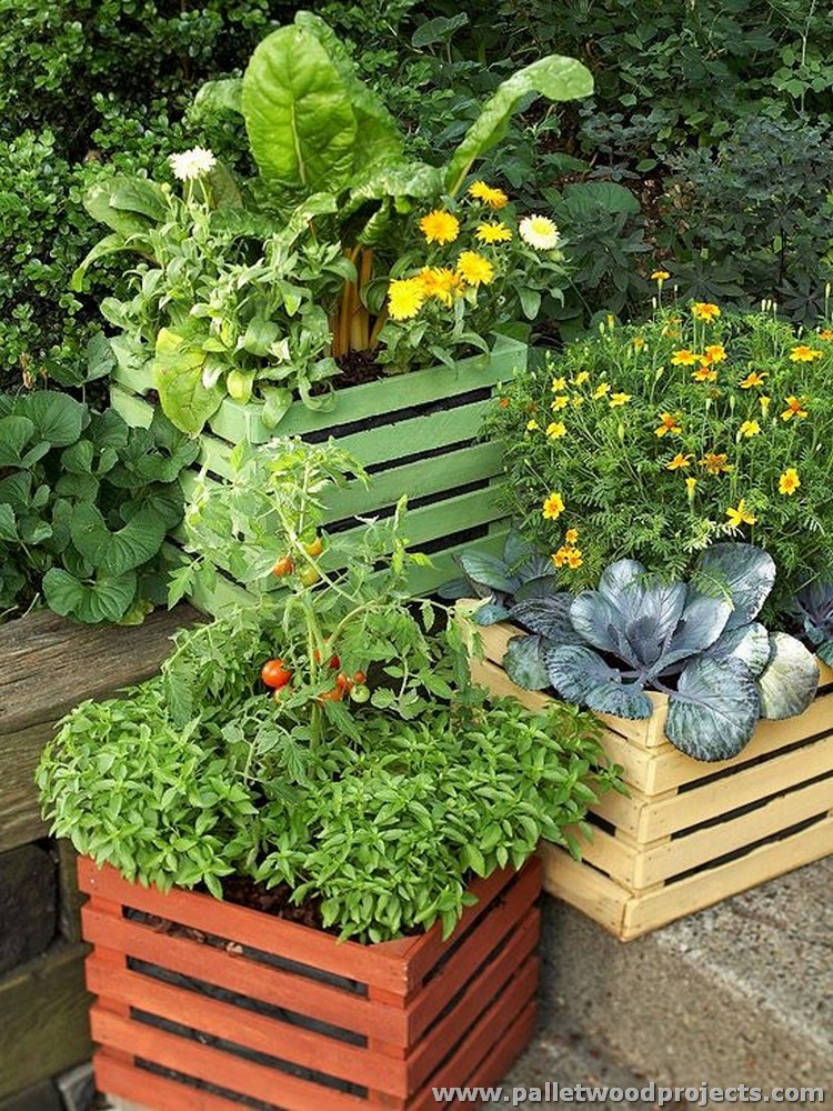 Pallet and Crate Vegetable Containers