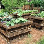 Raised Pallet Garden Vege and Flower Beds
